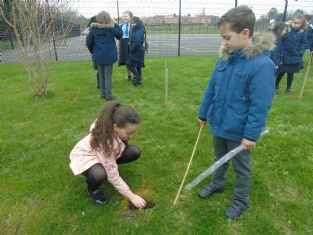 Year 3 plant new trees!